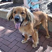 Adopt A Pet :: Charley - Washington, DC