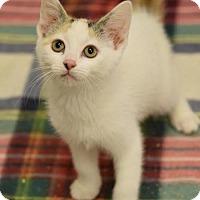 Adopt A Pet :: Julie - DFW Metroplex, TX