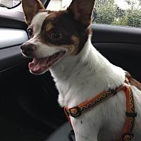 Adopt A Pet :: Elvis - Pataskala, OH