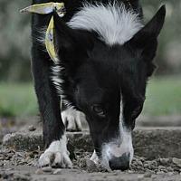 Adopt A Pet :: Prada - Evansville, IN