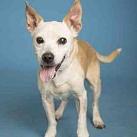 Adopt A Pet :: PEANUT BUTTER - Phoenix, AZ