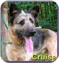 Airedale Terrier/German Shepherd Dog Mix Dog for adoption in Aldie, Virginia - Cruise