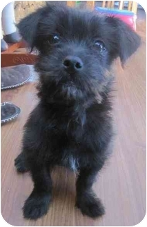 Black Dog Rescue Chilliwack