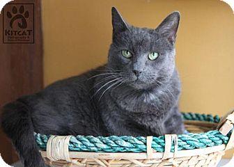 Domestic Shorthair Cat for adoption in Lancaster, Massachusetts - Lucy