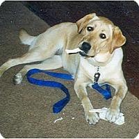 Adopt A Pet :: Maggie URGENT - Concord, CA