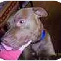 Adopt A Pet :: Wilbur - Conyers, GA