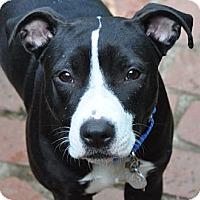 Adopt A Pet :: May May - Santa Monica, CA