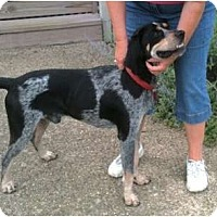 Adopt A Pet :: Opie - Dallas, TX