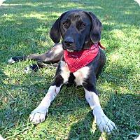 Adopt A Pet :: Rachel - Mocksville, NC
