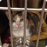 Adopt A Pet :: Daisy - Muncie, IN