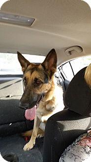 German Shepherd Dog Dog for adoption in Alameda, California - Rambler