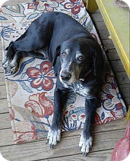 Labrador Retriever Mix Dog for adoption in Austin, Texas - Natasha