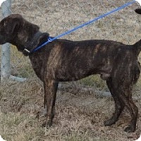 Adopt A Pet :: Bear - Olive Branch, MS