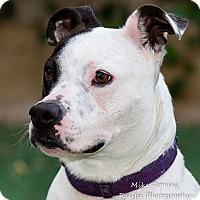 Adopt A Pet :: Jellie - Westminster, CA