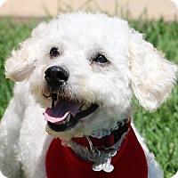 Adopt A Pet :: Jesse - La Costa, CA