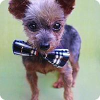 Adopt A Pet :: Megatron - Benton, LA