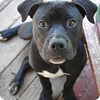Adopt A Pet :: Watson - Reisterstown, MD