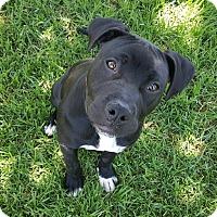 Adopt A Pet :: Rufus - Lompoc, CA