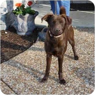 Basenji/Miniature Pinscher Mix Dog for adoption in Arlington, Tennessee - Gia-**UPDATE!**