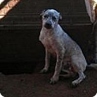 Adopt A Pet :: Jack - Blanchard, OK