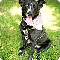 Adopt A Pet :: Bailey - Clarksburg, MD
