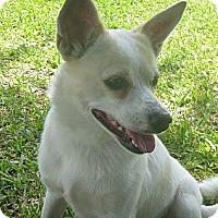 Adopt A Pet :: Sandy - St. Petersburg, FL