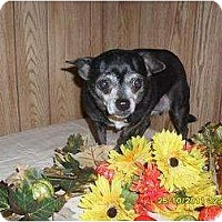 Adopt A Pet :: Toya - Chandlersville, OH