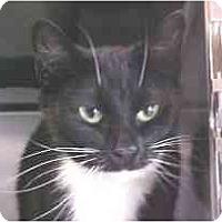 Adopt A Pet :: Cheyenne - Lunenburg, MA