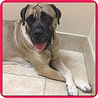 Adopt A Pet :: Corky - Phoenix, AZ