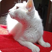 Adopt A Pet :: Gypsy - N. Billerica, MA