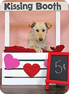 Retriever (Unknown Type) Mix Puppy for adoption in Waldorf, Maryland - Gus