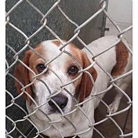 Adopt A Pet :: Sherlock - Urgent! - Zanesville, OH