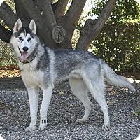 Adopt A Pet :: Benjamin - Santa Barbara, CA