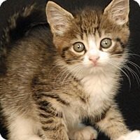 Adopt A Pet :: Maui - Newland, NC