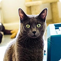 Adopt A Pet :: Rogue - Boise, ID