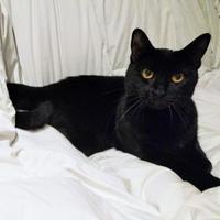 Adopt A Pet :: Patty - Calgary, AB