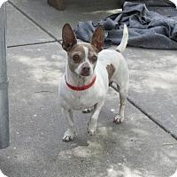 Adopt A Pet :: Violet - Oakland, CA