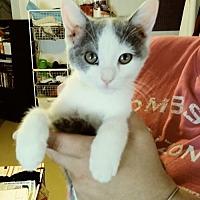 Adopt A Pet :: Sonic - San Tan Valley, AZ