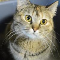 Adopt A Pet :: layla - Muskegon, MI
