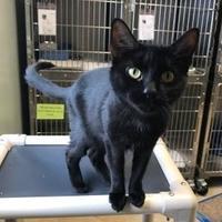 Adopt A Pet :: Gabby - Barco, NC