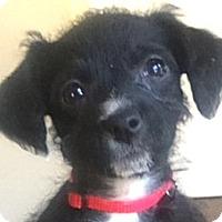 Adopt A Pet :: Baby Ariel - Oakley, CA