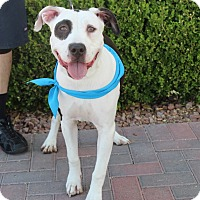 Adopt A Pet :: KHLOE - Las Vegas, NV