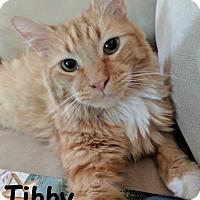 Adopt A Pet :: Tibby - Las Vegas, NV