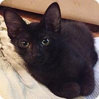 Adopt A Pet :: Hartsell - North Highlands, CA