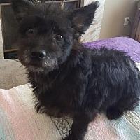 Adopt A Pet :: Tesla - San Clemente, CA