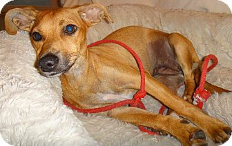 Adopt A Pet :: In Emilia's Heart!!  - Ft Myers Beach, FL