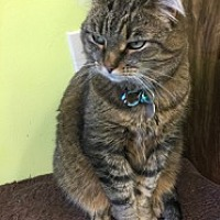 Adopt A Pet :: Snickers - Evergreen, CO