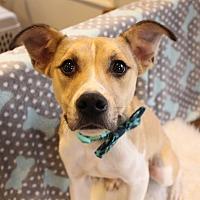 Adopt A Pet :: Dante - Florence, KY