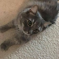 Adopt A Pet :: Maximus - Toms River, NJ