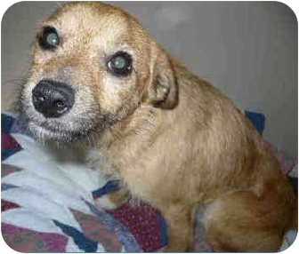 Border Terrier Mix Dog for adoption in San Clemente, California - OSCAR